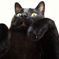Black cat love! looks like my cat Kenny