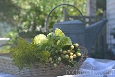 Cottage Fix blog - Friday Flower Power, chartreuse blooms