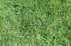 27. Grass Texture