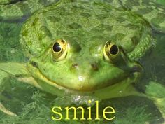 An ear to ear smile... frogs don't have precisely ears
