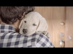 Budweiser's New Anti-Drinking & Driving Commercial Is Wonderful & Just Might Make You Cry