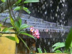 1/3(火)バリ島ウブドのお天気は雨。室内温度28.6℃、湿度76%。新年になってから雨続きの毎日です。朝は良い天気~♪と思ったのもつかの間、また雨です。。。