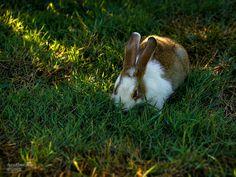 https://flic.kr/p/xDiuV1   bunny   baby bunny orphaned