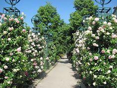Paris Flâneuse: Promenade Plantée in rose season