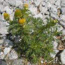 ¿Malas hierbas? Conoce el tipo de suelo a través de las hierbas espontáneas ecoagricultor.com