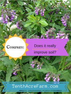 Does Comfrey Really Improve Soil?
