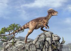 Pachycephalosaurus (dinosaurio marginocéfalo del Cretácico, 68MA) (Vlad Konstantinov)