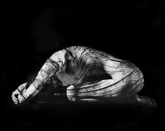 'Pinus longeava 0-01,' original black and white photograph by artist Steve Engelmann available at SaatchiArt #BlackandWhite