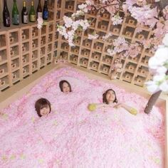 Sakura Chill Bar: Cherry Blossom Bar with Sakura Petal Pool Opening in Tokyo - Cherry Blossom Petals, Cherry Blossom Season, Japan Travel Guide, Tokyo Travel, Pop Up Bar, Japanese Sake, Around The World In 80 Days, Sculpture Projects, Spring Photos