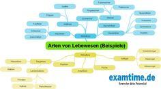 Wie man Biologie gut lernen kann? Am besten online mithilfe unserer kostenlosen Mindmap!