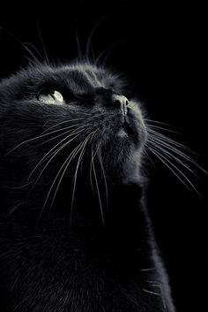 Black by Tim Forbrig