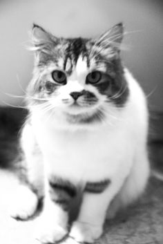 so fluffy :3