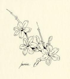 jasmine flower clip art google search art on skin pinterest jasmine clip art and drawings. Black Bedroom Furniture Sets. Home Design Ideas