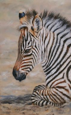 Baby Zebra  (by David Stribbling)