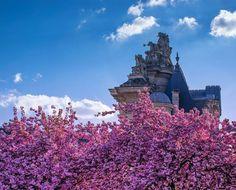 Hotels-live.com/pages/sejours-pas-chers - Cherry blossom in Lille Photography taken today (April 28 2016). Lille France #ilovemycity #lille #cherryblossom #lillemaville #nothernfrance Hotels-live.com via https://www.instagram.com/p/BEwamwsPOpl/