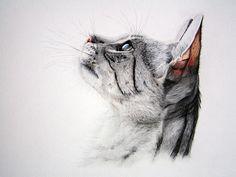 Savannah cat II by ~lillyart-11