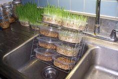 Rabbit fodder system