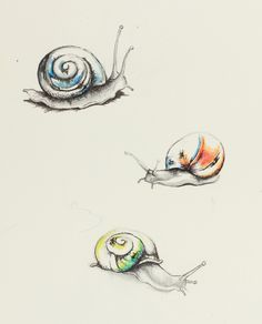 Posts about Drawings written by Carrolyn Lakowski Watercolor Animals, Watercolor Art, Snail Tattoo, Art Sketches, Art Drawings, Snail Art, Tinta China, Envelope Art, Insect Art