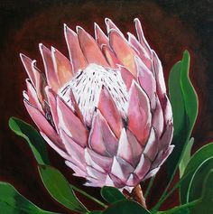 Protea Art Print by Jacqui Simpson Protea Art, Flor Protea, Protea Flower, Art Floral, List Of Paintings, Oil Paintings, Fabric Artwork, Australian Native Flowers, Botanical Art