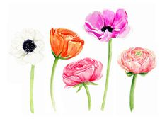 Poppies in a Row - Watercolor Print   April Preston Design