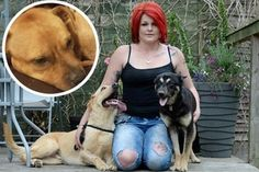 As Staffordshire Bull Terrier dies, mum asks 'why would anyone want to poison my three dogs? States In America, Staffordshire Bull Terrier, Pets, People, Animals, Animals And Pets, Animales, Animaux, People Illustration