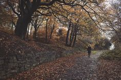 enchanting-autumn:  Ladybridge Lanr by mike H 001 on Flickr.