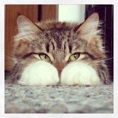 https://www.facebook.com/lifewithcats