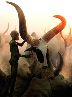 Dinka Boy with Long Horned Bull, South Sudan (2006)  Carol Beckwith and Angela Fisher