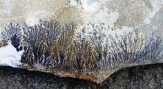 manganese dendrites from Tzoumerka Mountains; Pindus, Greece