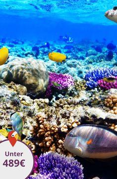 04.07.2016 - Tauchurlaub am Roten Meer #diving #holiday