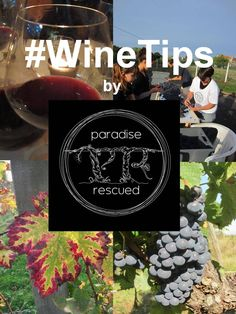 Our new #WineTips board is your shortcut to the best quick tips and hints on wine.....tasting, growing, serving, producing, storage....    Follow the #WineTips hashtag. Post us a pin and tell us what you would like to see as the next #WineTip!