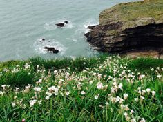 Read: A long day's walk on the Pembrokeshire Coastal Path in #Wales @LandOfMyFathers @visitpembs #Walking