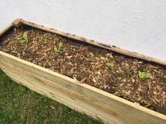 Paillis de pin autour de la salade Permaculture, Potager Palettes, Barbecue, Garden Design, Gardening, Patio, Jeans, Nature, Balcony Design