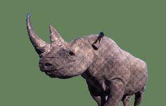 We kennen de neushoorn als het robuuste dier uit Afrika en Azië, waar je maar beter geen ruzie mee kunt krijgen. Hoe kan deze kolos nou een totemdier zijn van de spirituele Gene Keys? De 38ste Gene Key is namelijk in alle frequenties robuust en strijdvaardig. Lees meer: Piggy Bank, Africa, Money Bank