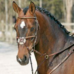 Pony Saddle, Hunter Jumper, Head Shots, Horse Tack, Horse Riding, My Little Pony, Equestrian, Horses, Life