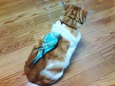 イメージ0 - 猫が背中にインコを乗せて~の画像 - 気ままに気長に - Yahoo!ブログ