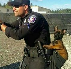 Malinois dog - Source by Military Working Dogs, Military Dogs, Police Dogs, Shepherd Puppies, German Shepherd Dogs, German Shepherds, Funny Dogs, Cute Dogs, Belgian Malinois Puppies
