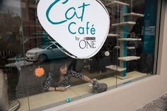 PurinaOne Cat Cafe was a NYC pop-up in April 2014 that gave residents an additional adoption outlet. #PopUpRetail #NYC