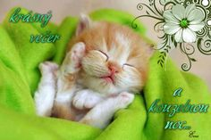 Picture Search, Search Engine, Good Night, Engineering, World, Cats, Pictures, Animals, Facebook