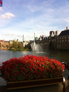 Visiting The Hague .. Parliament buildings, stunning surroundings and a beautiful city with plenty of history!