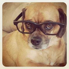 {Puggle} Professor