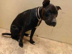 TO BE DESTROYED WED 9/24/14 Brooklyn Center   ASHTON - A1014530   FEMALE, BLACK / WHITE, PIT BULL MIX, 3 yrs STRAY - STRAY WAIT, NO HOLD Reason STRAY  Intake condition EXAM REQ Intake Date 09/18/2014, From NY 11201, DueOut Date 09/21/2014,  https://www.facebook.com/Urgentdeathrowdogs/photos/pb.152876678058553.-2207520000.1411392581./873387706007443/?type=3&theater