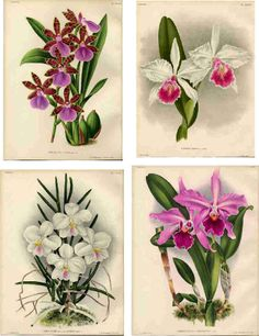 Free new age Collage Sheets for Pendants | Decoupage Paper Collage Sheets , Original Tissue, Vintage Orchids