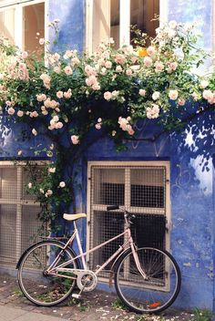 Beautiful blue building exterior with peach climbing roses.