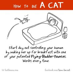 How to be a cat 3
