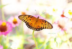 Butterflies in the Rose Garden
