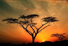 Samburu Hills Sunrise, Samburu Game Reservation, Kenya wallpaper