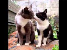 10 señales que indican que tu gato te quiere. - YouTube