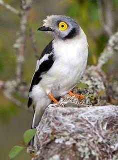 Aves e animais: pássaros bonitos