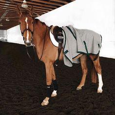 Good morning, sunshine ☀️❄️ Pretty Horses, Beautiful Horses, Cute Horses, Horse Love, Poney, Equine Photography, Equestrian Outfits, Horse Photos, Horseback Riding